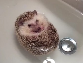 This hedgehog is a Transformer boat